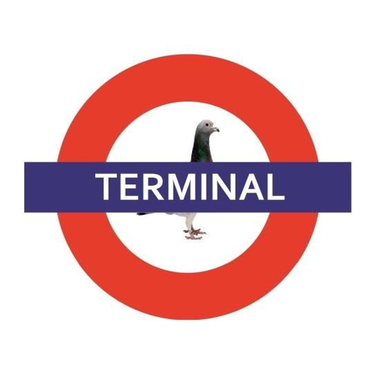 TERMINAL - white border